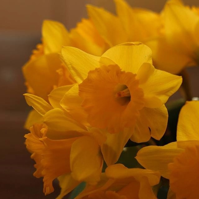 Make sure you give to Daffodil day today if you can.